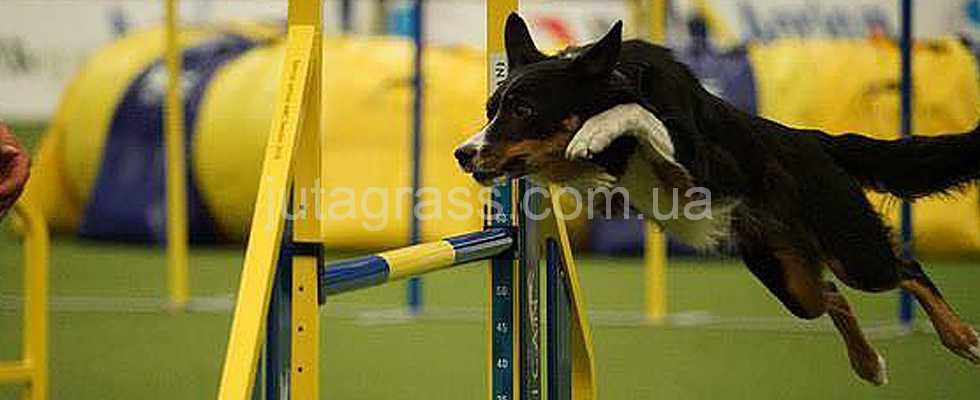 Многолетнее партнерство JUTAgrass и Ассоциации по Аджилити – это забота о собаках-спортсменах
