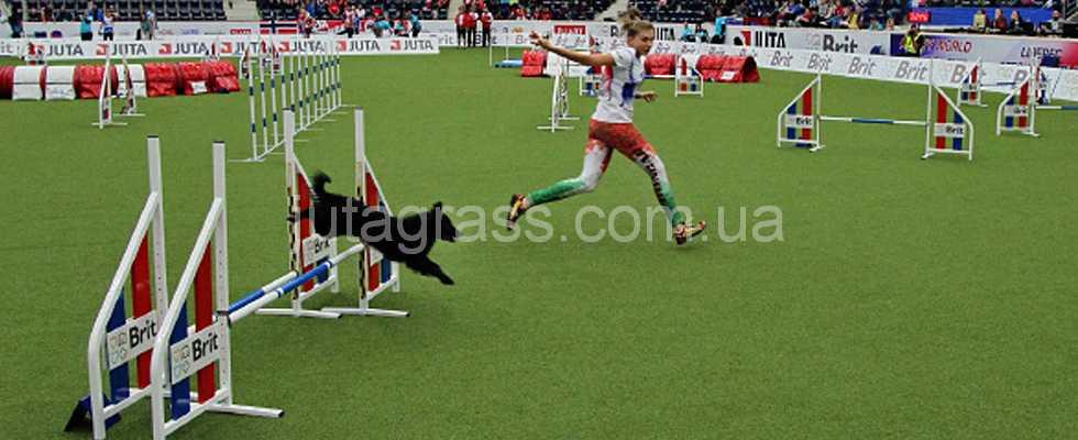 Фото с соревнований по аджилити проводимых на искуссвтенном спортивном газоне Jutagrass Play Comfort