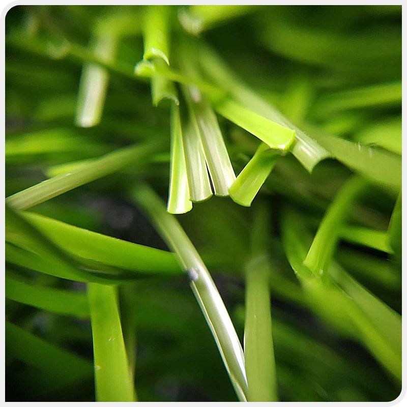 Искусственная трава JUTAgrass, сечение ворса – С-профиль